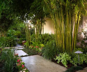 Ý tưởng thiết kế vườn tre - làm thế nào để tạo ra một phong cảnh đẹp như tranh vẽ