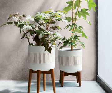 Gợi ý những mẫu thiết kế chậu cây xanh trong nhà
